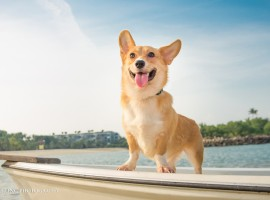 1 csling pet corgi Diagonal